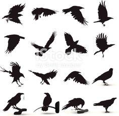 Raven Silhouette Tattoos for Women Silhouette Tattoos, Bird Silhouette, Silhouette Vector, Crow Art, Bird Art, Rabe Tattoo, Arte Dark Souls, Theme Tattoo, Raven Bird
