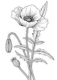 Vysledek Obrazku Pro Predloha Vlci Mak Predlohy Poppy Drawing