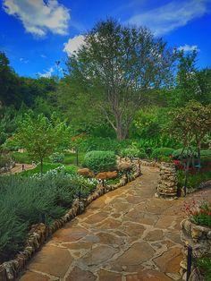 Beautiful vegetation of the San Antonio Japanese Tea Garden