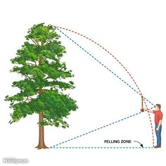 "Trees are taller than you think and reach farther on the ground than you'd expect. You can estimate where a tree will fall by using the ""ax handle trick."" Hold an ax handle at arm's length, close one eye, and back away from or move toward the tree until the top of the ax is even with the treetop and the bottom is even with the base. Your feet should be about where the treetop will rest after falling. It's just an estimate, though, so allow extra room if there's something it might fall on!"