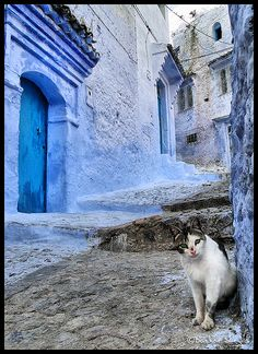 Chefchaoun, Morocco. Need a change? Paint the town blue!