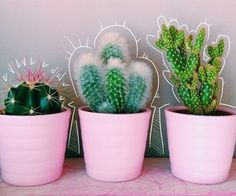Cute little cactus plants for the bedroom Cactus Plante, Plant Aesthetic, Plants Are Friends, Cactus Y Suculentas, Echeveria, Cacti And Succulents, Indoor Plants, Potted Plants, House Plants