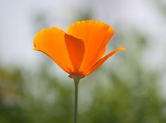 Wildflower Field in Riverside,CA #ILoveRiverside