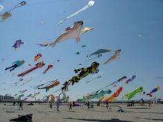 Fano, Denmark - International Kite Meeting - a wonderful site for 6+ kilometers along the beach!