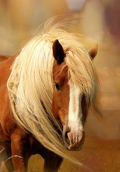 The horse, with beauty unsurpassed, strength immeasurable and grace unlike any other, still remains humble enough to carry a man upon his back. ~ Amber Senti