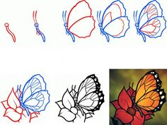 How to draw a butterfly step by step. Master class with detailed ...