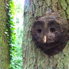 Owl mud face on a tree - Made during one of our school sessions  #forestschool #landart #barnowl