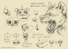 Draw a hyena spotted to draw draw to anatomy hyena how to draw hyena paws Animal Sketches, Animal Drawings, Art Sketches, Art Drawings, Werewolf Drawings, Dog Anatomy, Anatomy Drawing, Animal Anatomy, Sketches Tutorial