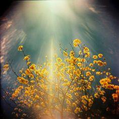 Wonderful light