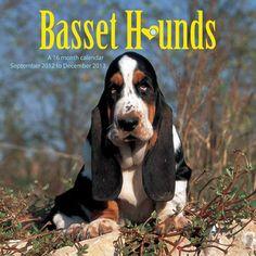 Basset Hounds Wall Calendar: This 2013 wall calendar features a dozen images of sweet Basset Hounds. The perfect gift for anyone who loves these wonderful dogs!  http://www.calendars.com/Basset-Hounds/Basset-Hounds-2013-Wall-Calendar-/prod201300001903/?categoryId=cat10022=cat10022#