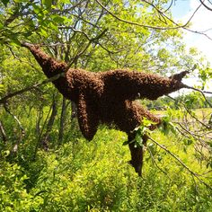 Huge Bee Swarm Pictures Images, Nature Pictures, Million Flowers, Bee Swarm, Bee Do, Bees And Wasps, Bee Sting, Bee Theme, Busy Bee