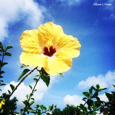 Hollis Garden #hollisgarden #garden #flower #Florida #Lakeland #botanicalgarden