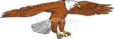 Bald Eagle Swooping Drawing Vector Stock Illustration.  Drawing sketch style illustration of bald eagle swooping wings flapping viewed from the side set on isolated white background. #illustration #BaldEagleSwooping