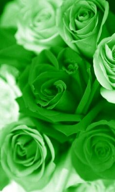 Green roses.