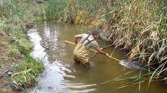 Carp Spear Fishing From Lake