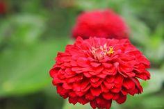 Olhares do avesso: Sobre tudo (miniconto) Sinto-me fora de mim... Não consigo mexer a língua, meu raciocínio... Lento... Sinto-me uma flor atrás de outra flor...! I feel out of me ... I can not move my tongue, my reasoning ... slow ... I feel like a flower after another flower ...! #miniconto #littletale #feel #sinto #flower #flor #despir #strip #olharesdoavesso