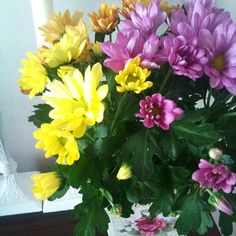 New colorful flowers =)
