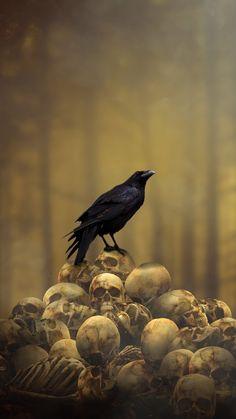 Crow and skulls Viking Wallpaper, Gothic Wallpaper, Skull Wallpaper, Dark Wallpaper, Wallpaper Backgrounds, Wallpaper Awesome, Iphone Backgrounds, Wallpapers, Crow Art