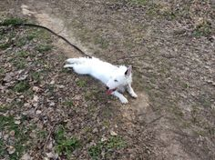 #chien Joyce, toute douce (bien que dynamique) et sociable a été adoptée lors de la journée d'adoption du 26 mars à l'animalerie de Bricomarché, Cestas