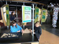 Porcupine stacking @echocenter in Burlington. It's a wonderful place to take the kids on a rainy day. #echocenter #burlington #vt #802 #vermont #vermontbyvermonters #newengland #vtfamily #burlingtonvt