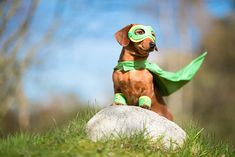 Summer Safety For Your Pet Funny Animals, Cute Animals, Pretty Animals, Summer Safety, Team Activities, Veterinary Services, Pet Supplements, Large Dog Breeds, Pet Clothes