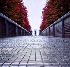 Karay hill, this is leading lines because there is a pathway leading your eyes to the fall leaves and trees