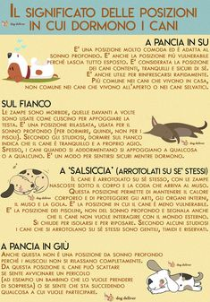 Il significato delle posizioni in cui dormono i cani | DogDeliver Love Pet, I Love Dogs, Pet Dogs, Dogs And Puppies, Big Friends, Dog Facts, Jack Russell Terrier, Dog Memes, Dog Quotes