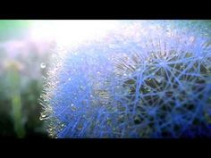 Harry Nilsson - The Most Beautiful World in the World Deva Premal, Harry Nilsson, Life Is Beautiful, Beautiful Things, Dandelion, Places To Visit, Photo And Video, Youtube, Mantra