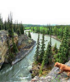 Gab Rivest hiking with Taïga along the river. Lapie Canyon, Yukon.–Gab Rivest arpente la rivière du Lapie Canyon avec Taïga.