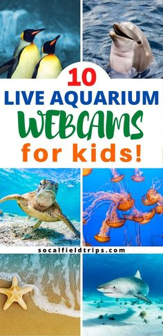 Do your kids love the ocean or are you teaching a lesson about ocean in school? Here is a list of live aquarium webcams that are sure to make your students excited about learning! 10 Live Aquarium Webcams For Kids Home Learning, Fun Learning, Preschool Activities, Educational Activities, Educational Websites, Ocean Activities, Senior Activities, Learning Shapes, Toddler Learning
