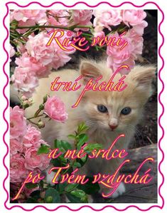 Kitty with pink Color Splash flowers Pretty Cats, Beautiful Cats, Animals Beautiful, Pretty Kitty, Beautiful Things, Simply Beautiful, Beautiful Flowers, Animals And Pets, Baby Animals