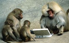 Funny Monkey Pictures - Unbound State | Humor , Funny Pictures and Interesting stuffs