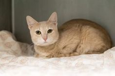 NEW PHOTO! Daisy was abandoned at shelter and wants a new home!