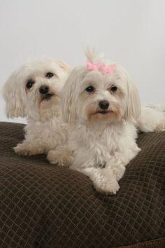 Gotta make these babies a beautiful home!  Riley & Emerson. - Kelly O'Neil -
