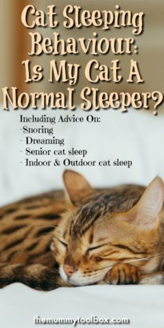 cat sleeping behaviour including whether your cat is a normal sleeper, too much sleeping, snoring, dreaming and sleep in senior cats. Kittens Cutest, Cats And Kittens, Tiger Stuffed Animal, Cat Has Fleas, Sleeping Kitten, Dog Branding, Pet Mice, Kitten Care, Kitty Games