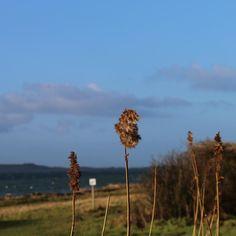 """Fritidsområde ved Skovkrogen """"Vandfald"""" i Aa Å #assens #visitfyn #visitdenmark #fyn #nature #nature_perfection #sea #naturelovers #mothernature #natur #loves_skyandsunset #loveit #denmark #danmark #dänemark #landscape #assensnatur #mitassens #vildmedfyn #fynerfin #vielskernaturen"""