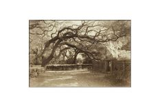 Tree Photography-Sepia Photograph-St by SCPerkinsPhotography