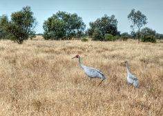 Outback 2011: Bladensburg National Park « lookANDsee