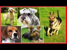 Las 10 Razas de Perros más Populares