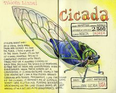 by Tommy Kane #journal #cicada