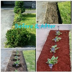 """Front yard landscaping project. Cheap and easy!  Shovel $6 Hostas $8 each (×5 - will grow to medium sized ~20"""") Solar Lamps $18 for 6-pack Red Mulch $2.50 per bag (×3)"""