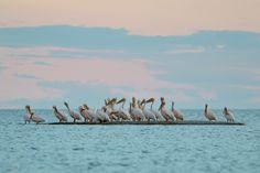 Experience the Makgadikgadi Pans with Pelican Lodge; www.pelicanlodge.co.bw, or www.facebook.com/Pelican.Lodge.Nata. A member of Africa Safari Camps, www.africasafaricamps.com.