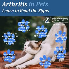 Is your #dog or #cat showing difficulty jumping in and out of the car, climbing stairs, or rising from bed? If so, they may be showing early signs of #osteoarthritis.    #Arthritis is a painful, progressive condition of the joints and joint cartilage, which can appear worse during colder weather.    And it's not just a disease of the elderly - studies have shown that up to 20% of dogs actually display symptoms of osteoarthritis by the time they are just one year old.    Arthritis is incurable, b Anti Stress, Learn To Read, State Art, Arthritis, Climbing, Stairs, Weather, Signs, Pets