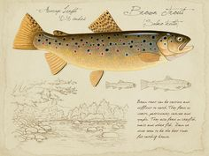 Brown Trout - inch limited edition print by Matt Patterson, trout print, fishing art print, cabin decor Trout Fishing Tips, Fishing Lures, Fish Drawings, Brown Trout, Kunst Poster, Fish Print, Gone Fishing, Colorful Fish, Freshwater Fish