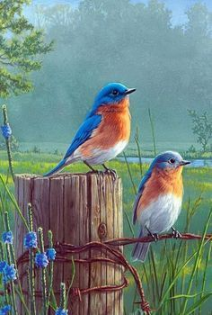 thursday - on the house - Diamond Painting- Full Drill Standing Birds Scenery Pictures, Bird Pictures, Mosaic Pictures, Exotic Birds, Colorful Birds, Pretty Birds, Beautiful Birds, Graffiti Kunst, Cross Paintings
