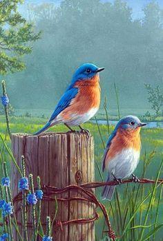 Bluebirds...Jim Hautman