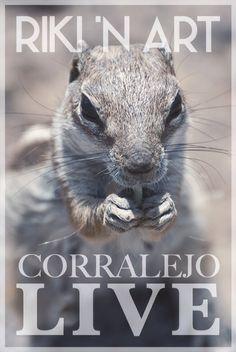 #un_día_como_un_otro #corralejo #Fuerteventura #animal #life #live #verano #2015 #photo #foto #en_la_tarde #hola #España #summer #normal_day #love #like4like #nikon #relax #reflex #scoiattolo #squirrel #ardilla