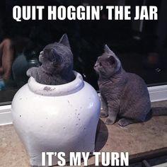 LOL, must be a fun jar! See more at: www.boneandyarn.com
