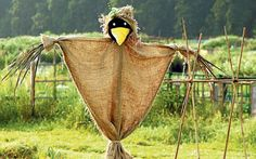 Not as much separates university graduates from scarecrows as one might think.