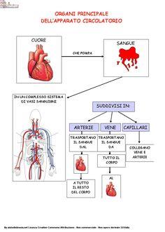 Apparato cardiocircolatorio yahoo dating